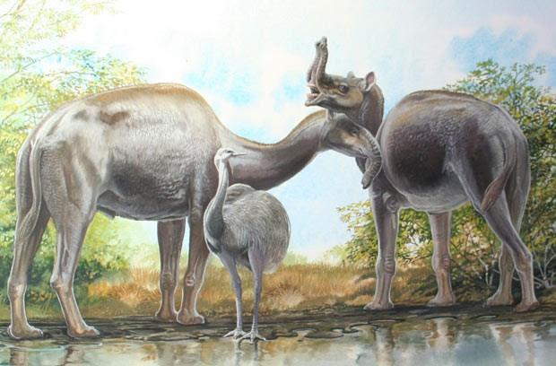 Mistério de mamíferos 'esquisitos' descobertos por Darwin é solucionado