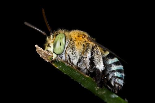 sleeping bee - Black is In series:D IMG_0445 copy