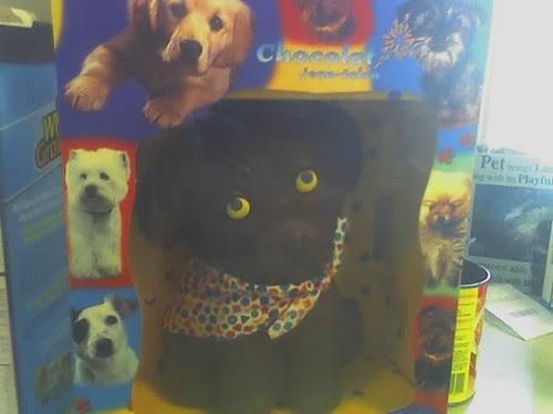 chocolate dog 2