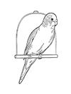 Muhabbet Kuşu Boyama ücretsiz Boyama Resimleri