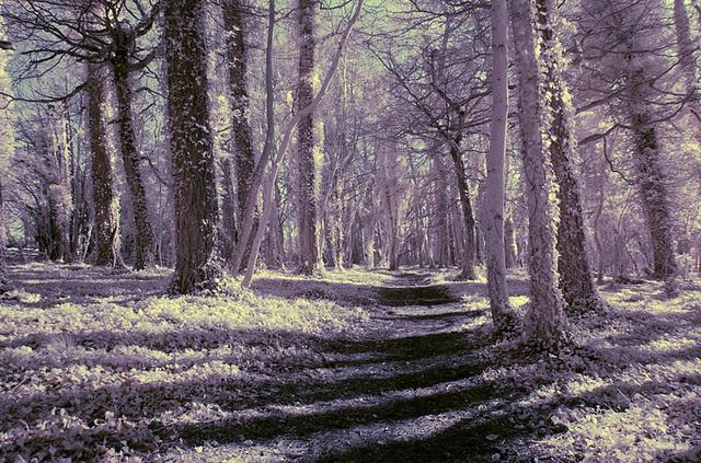 Barrowpiece woods