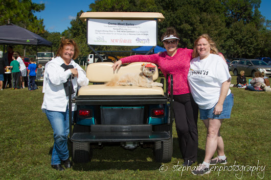 Woofstock 2014 Carrollwood: Tampa Pet Photography