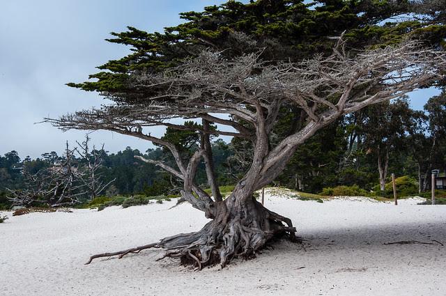 california 2013-28