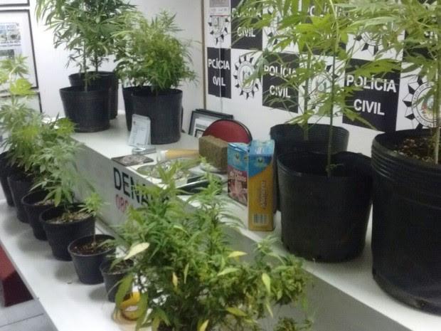 Suspeito de ser o responsável pela plantação de maconha foi preso em flagante (Foto: Polícia Civil/Divulgação)