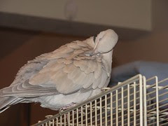 I must preen now