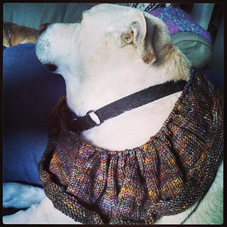 Curve shaped! Just Enough Ruffles #scarf Zeus was not thrilled to model #knitstagram #dogstagram Ruffle shaping next...