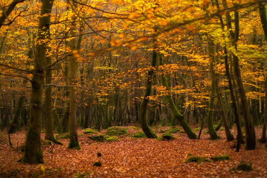 Are these the most attractive forests in the UK?