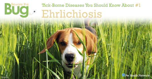 6 Tick-Borne Diseases You Should Know About