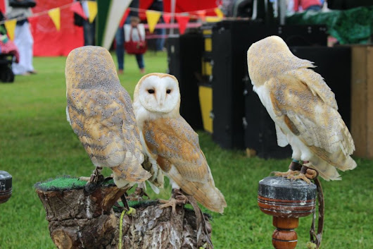 Wildlife at the Country Fair