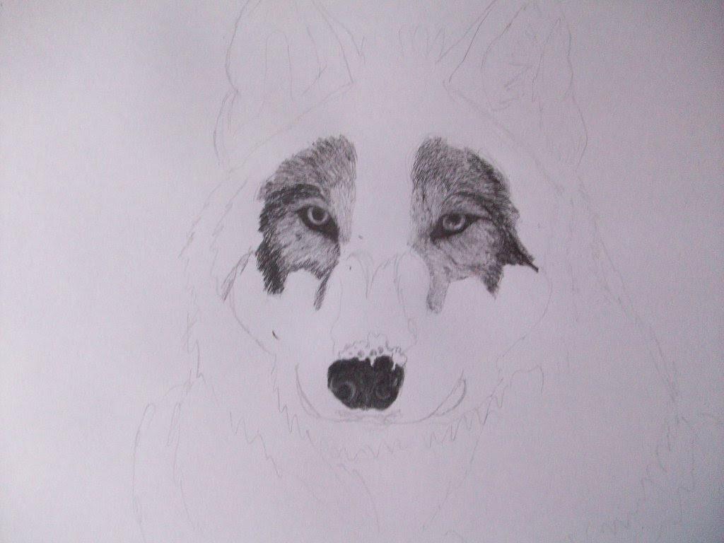 Dibujo A Lápiz De Un Lobo Con Los Pasos Aprender Manualidades