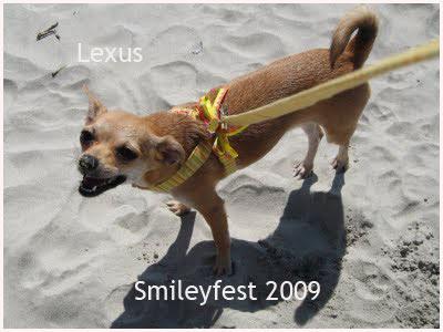 29-Lexus---2