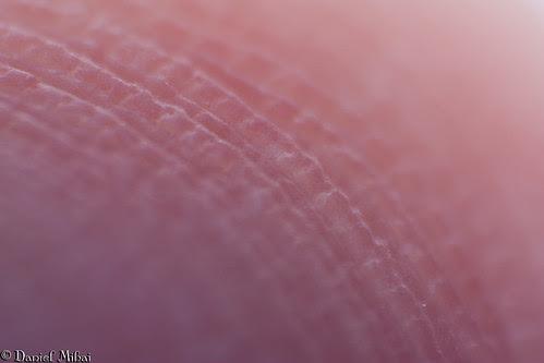 Fingerprints (macro)