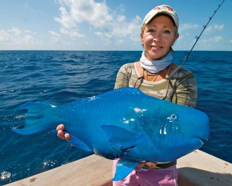 Синий скар. животные, интересное, удивительное, фото