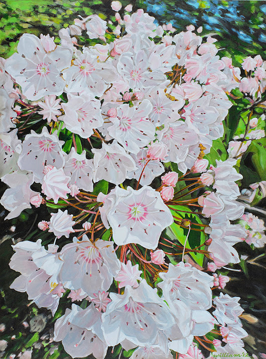 Mountain Laurel Blossom — A Bit About It . . .