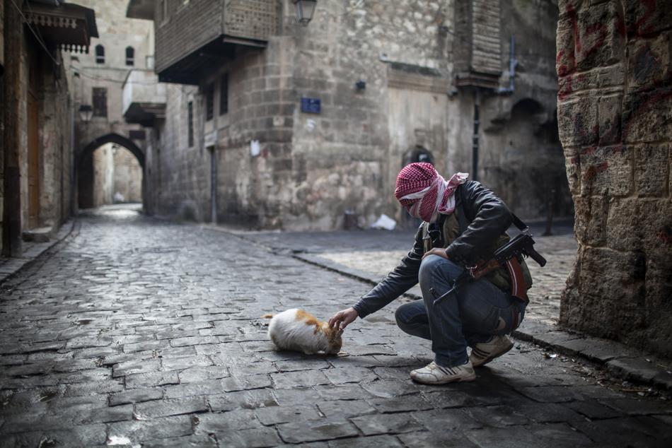 Μαχητής του Απελευθερωτικού Στρατού της Συρίας χαιδεύει μια γάτα σε δρόμο  της παλιάς πόλης του Χαλεπίου στη Συρία.