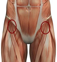 illustration of hip flexors