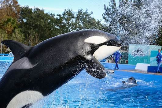 SeaWorld admits employees posed as animal activists to spy on critics