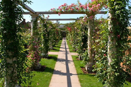 The Pergola Garden at David Austin Roses
