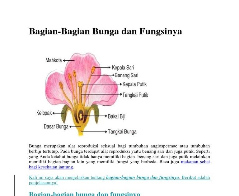 Fungsi Bagian Bagian Bunga Anggrek