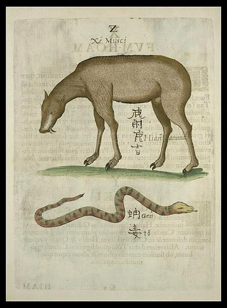 Tusked Quadruped and Snake