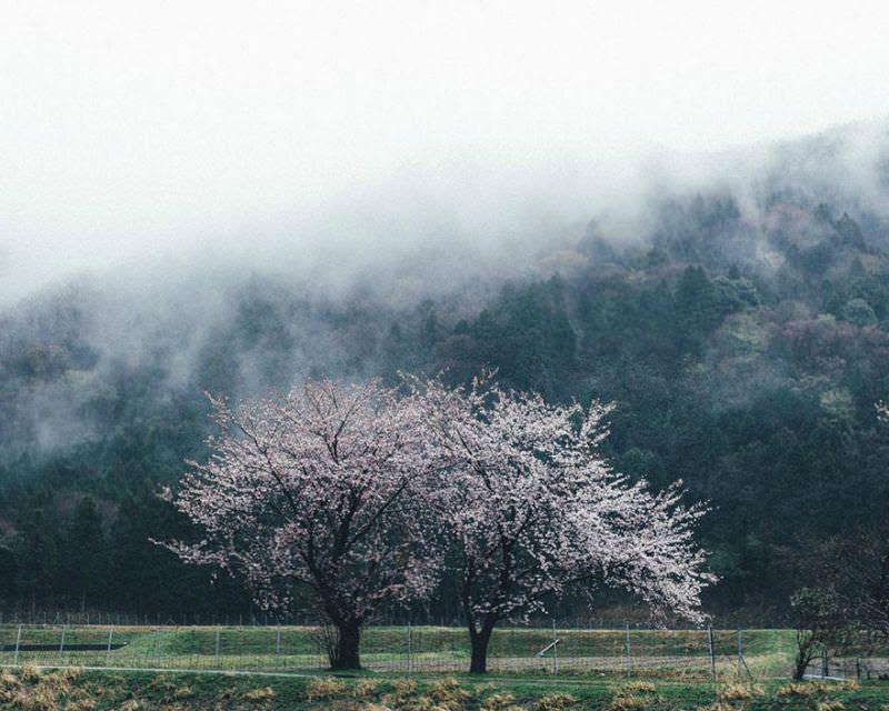 Belleza de japon foto 3