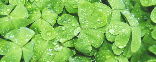 Law Firm Marketing: What's Luck Got To Do With It?