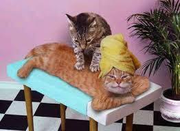 http://t2.gstatic.com/images?q=tbn:ETEmycFixY0yFM:http://i38.photobucket.com/albums/e131/el_leaved/funny/funny_pictures_Cat_Rub.jpg&t=1