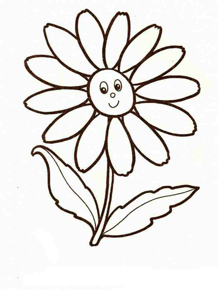 chamomile flower coloring pages 8