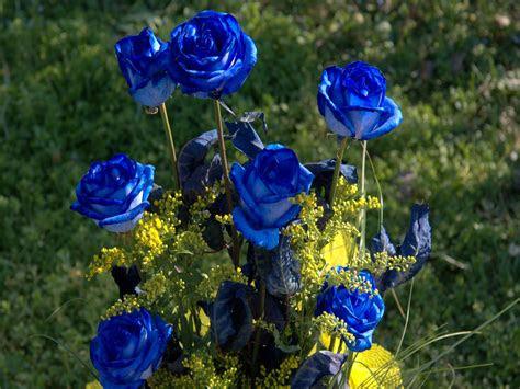knumathise real blue roses  sale images