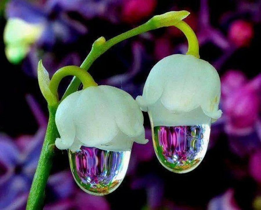 Fotos De Flores Raras Y Bonitas