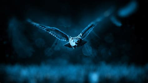 full hd wallpaper owl wings fly predator night desktop