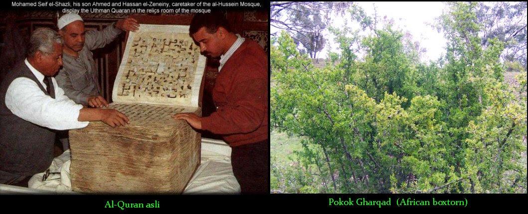 The Holy Quran & Gharqad Tree