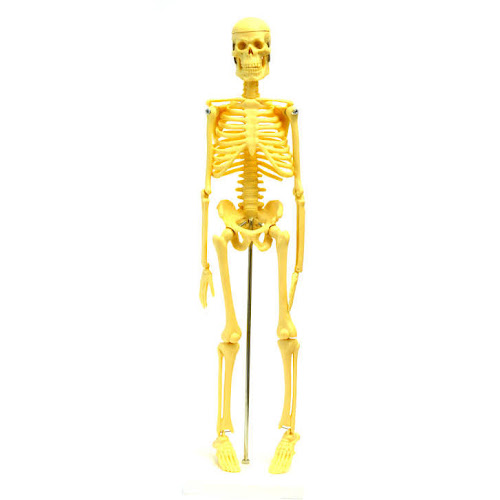 Google Express - hBARSCI JJ351034 Micro Skeleton Small Scale