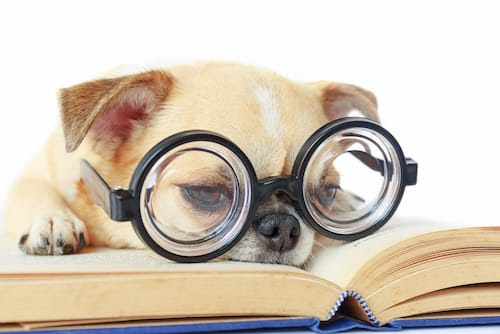 Dog Intelligence: Smartest Breeds, IQ Tests and Training Tips