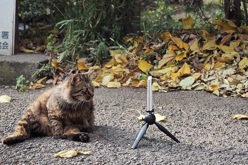 猫とTHETA