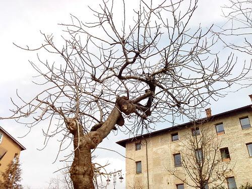 Architettura degli alberi di Cassano d'Adda by Ylbert Durishti