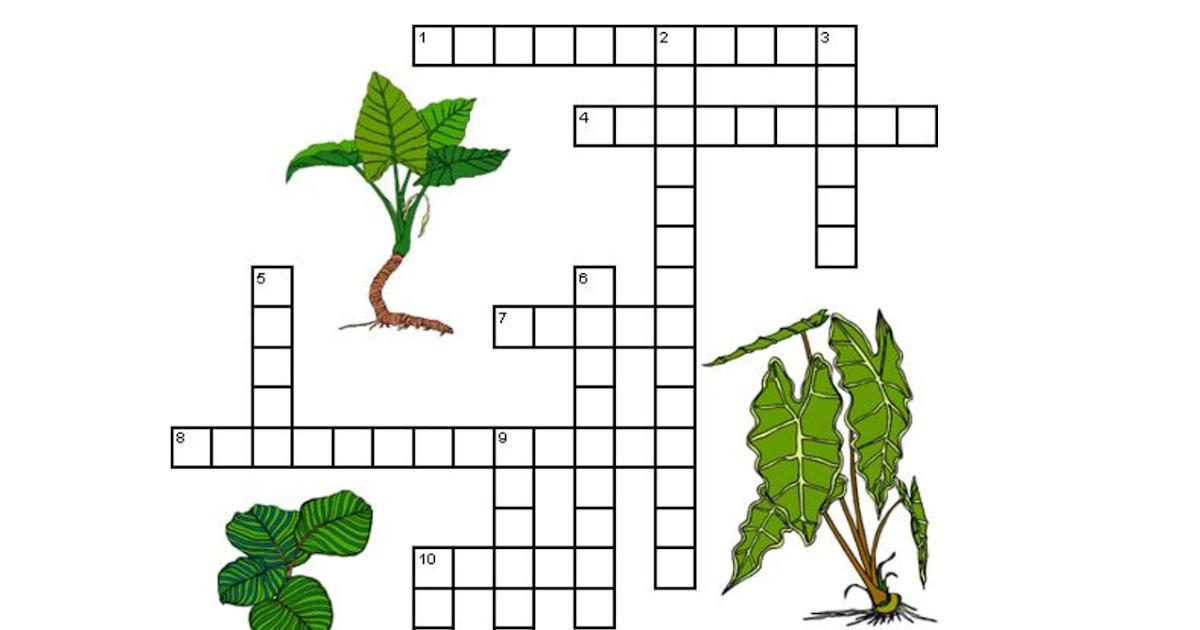 4th Grade Photosynthesis Diagram Worksheet - worksheet