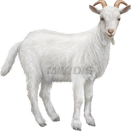 山羊野羊ヤギのイラスト条件付フリー素材集