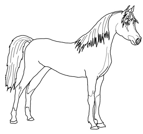 arabian horse coloring page_0