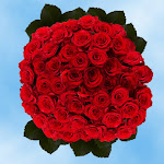 200 Red Roses Red Paris Roses Wholesale Bulk by GlobalRose
