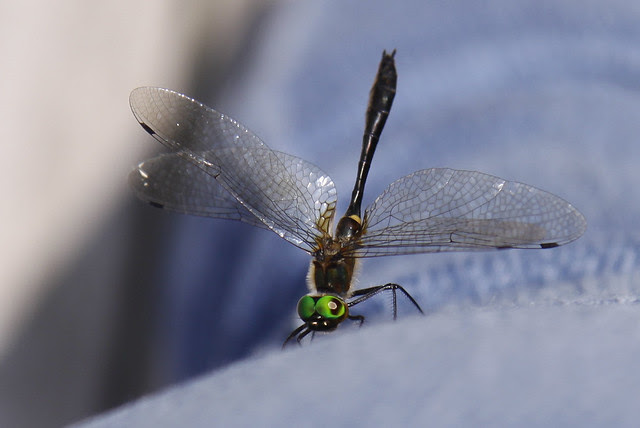 dragonfly on leg