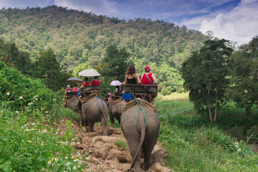 The Ultimate Chiang Mai Safari Starts on an Elephant's Back - Howie's HomeStay