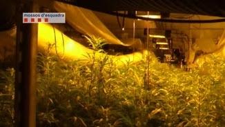 Una de les naus amb marihuana a Montcada i Reixac