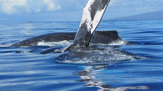 Why go on a whale watching tour? Here are just a few reasons.
