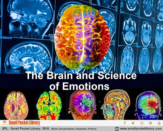 The Brain and Science of Emotions