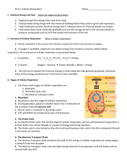 91 Cellular Respiration An Overview Worksheet Answers ...