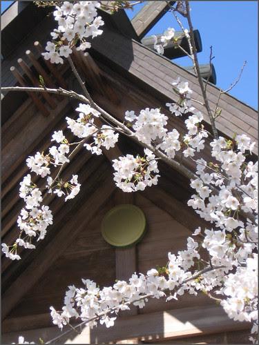 125 blossoms and Shinto symbol