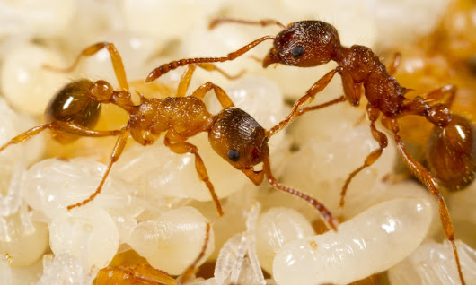 Can you solve it? The ants on a stick puzzle | Science | The Guardian