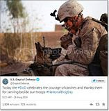 photo Militarycelebratesnationaldogday-2_zps78f332b0.jpg