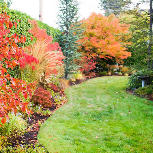 Fall Lawn-Care Secrets